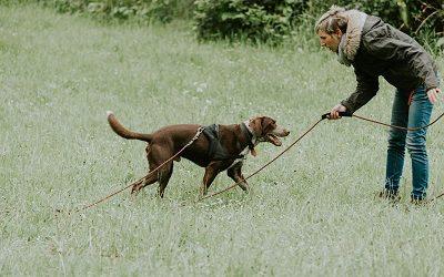 EDUCATION-chien-reactif