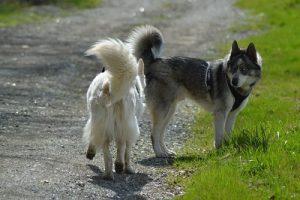 SOCIALISATION-chien-congeneres