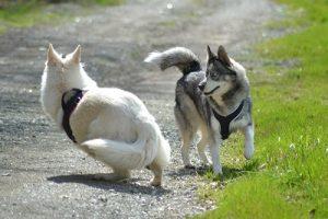 education de mon chien 91