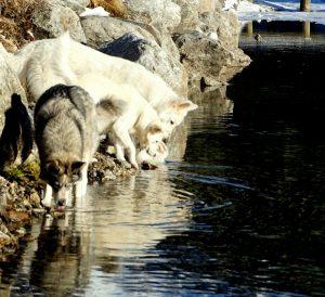 blog-chien-91