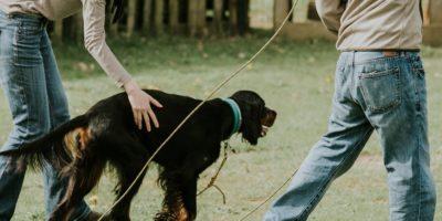 Nepal-eduacteur-canin-lempreinte