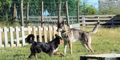 chien-education-canine-Dourdan