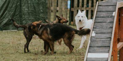 chien-education-collectif