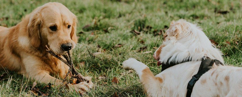 educateur-canin-socialisation