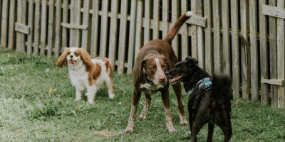 lempeinte-chien-education-91